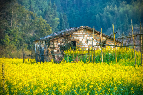 In de dag Geel Oilseed rape field in Wuyuan County, Jiangxi province, China. Wuyuan County was founded in the 28th year of Kaiyuan of the Tang Dynasty (740 A. D) for over 1200 years.