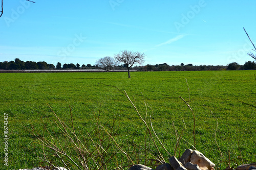 Foto op Aluminium Blauw Italy, Puglia region, typical countryside landscapes. Stone walls and cultivated land.