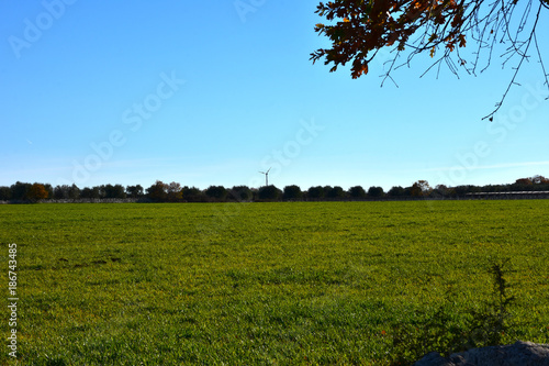 Foto op Aluminium Blauw Italy, Puglia region, typical countryside landscapes. Cultivated land.