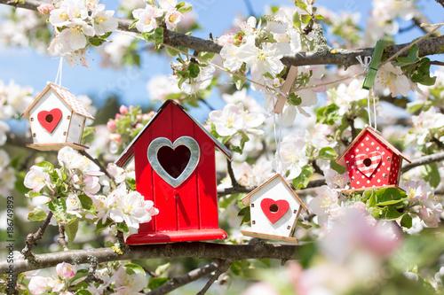 Cuadros en Lienzo Im Frühling