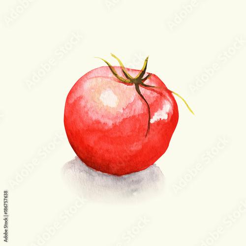 Obraz na plátně Pomidor- ilustracja ręcznie malowana