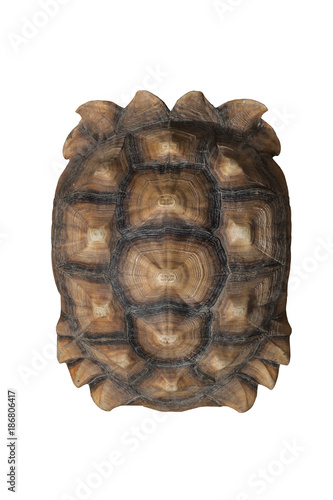 Tortoise shell brown color pattern or texture from giant turtle on white background, Sulcata,African Spurred Tortoise, closeup