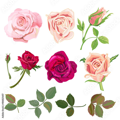 Set Of Roses Pink Red Flowers And Buds Green Leaves On White