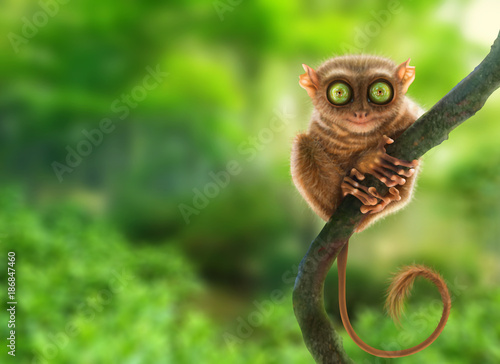 Tarsier monkey (Tarsius Syrichta) in natural jungle environment, Philippines Wallpaper Mural