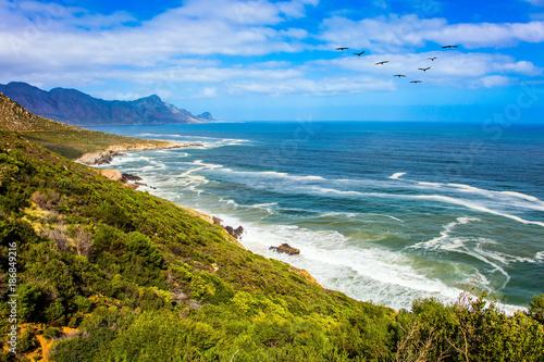 Fotografering Migratory birds over the surf