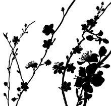 Silhouette Blossom Flowers Background Pattern
