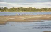 Sand Beach In The River And Fi...