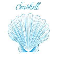 Clam Bivalve Sea Shell Hand Dr...