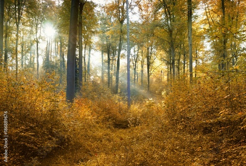 Herbstwald Canvas-taulu