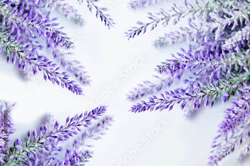 Lavender branches background