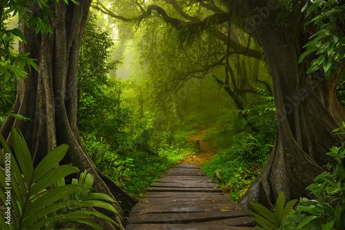 Foto op Canvas Bamboo Tropical rainforest