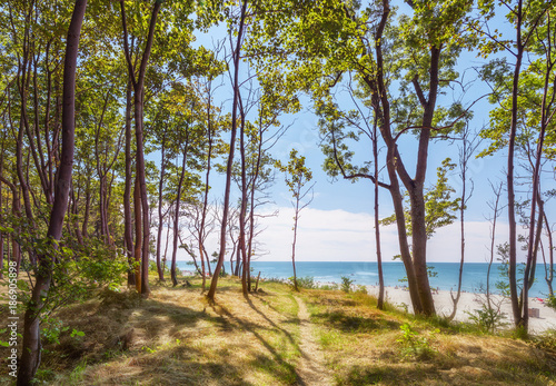 Photo Path to the sea in the park. Yantarny, Kaliningrad region. Russia