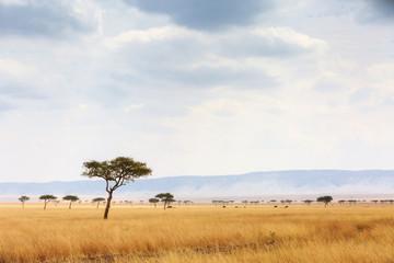 Kenya Open Field With Elephants in Background
