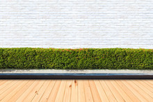 Wooden Floor And Green Bushes Fences At White Brick Wall Backgrounds.