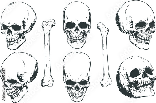 Obraz na plátne Hand drawn realistic human skulls and bones from different angles