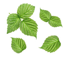 Raspberry Leaves Isolated On W...