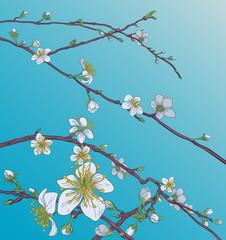 Panel Szklany Na szklane drzwi i okna Peach Cherry Blossom Flowers Background Pattern