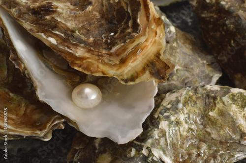 Perl in Austern