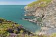 UK, Wales, Dinas Head peninsula at Pembrokeshire Coast National Park near Newport