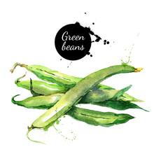 Green Beans. Hand Drawn Waterc...