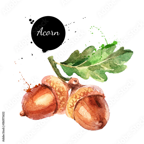 Photo Hand drawn watercolor painting of acorn isolated on white background