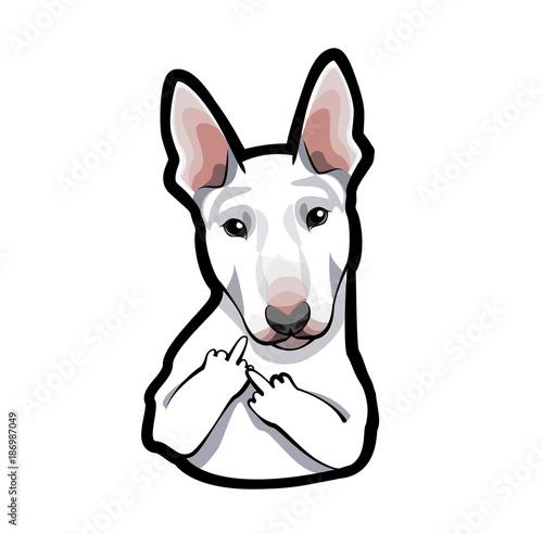 Fototapeta dog bull terrier on white background with middle finger.