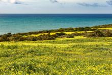 Italy, Sicily, Coast, Blooming Plants, Bermuda Buttercup