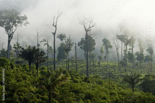 Brazil, Para, Itaituba, Amazon rainforest, slash and burn Poster