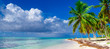 paradise beach tree palm tree