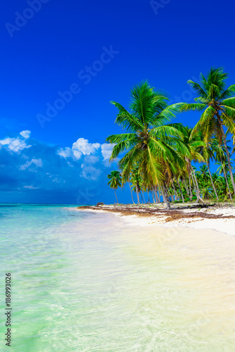 Foto op Canvas Eiland paradise beach tree palm tree