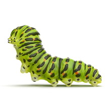 Caterpillar Papilio Xuthus. Is...