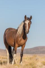 Wild Horse in Utah