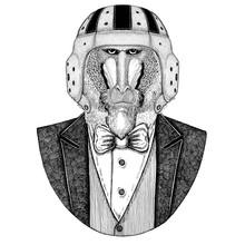 Monkey, Baboon, Dog-ape, Ape Elegant Rugby Player. Old School Vintage Rugby Helmet. American Football. Vintage Style Illustration For Tattoo, Emblem, Badge, Logo, Patch, T-shirt