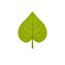 Linden Leaf Icon. Flat Illustration Of Linden Leaf Vector Icon Isolated On White Background