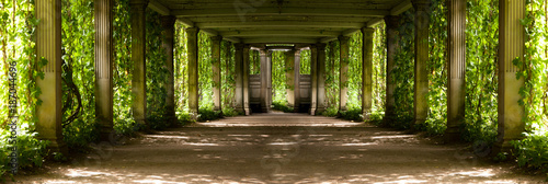 Photo panorama of a colonnade with old columns covered with wild grapes, highlighted w