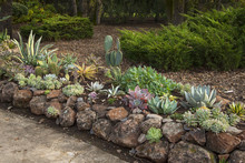 Landscaping With Succulents An...