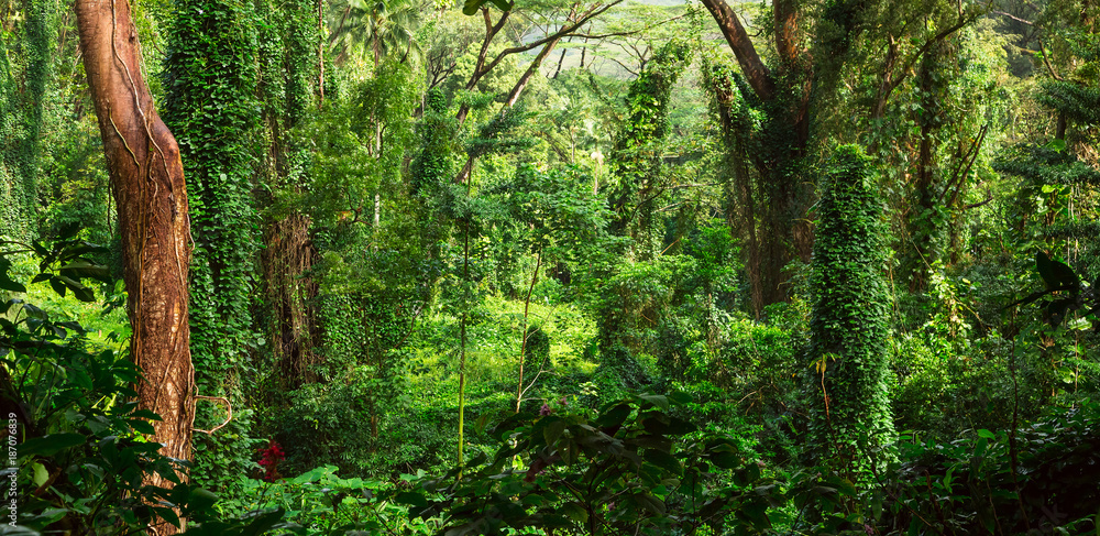 Fototapeta Tropical jungle