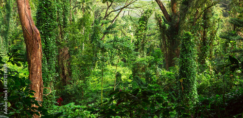 Fotomural Tropical jungle