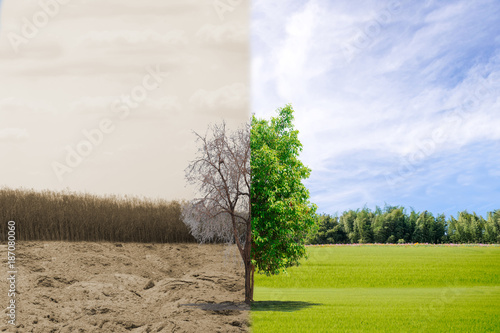 Foto  Ecology concept tree forest drought and forest refreshing