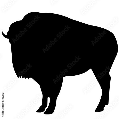 Valokuva  Bison