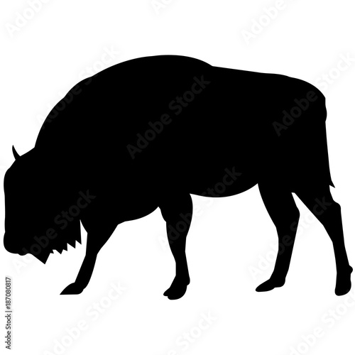 Vászonkép  Bison