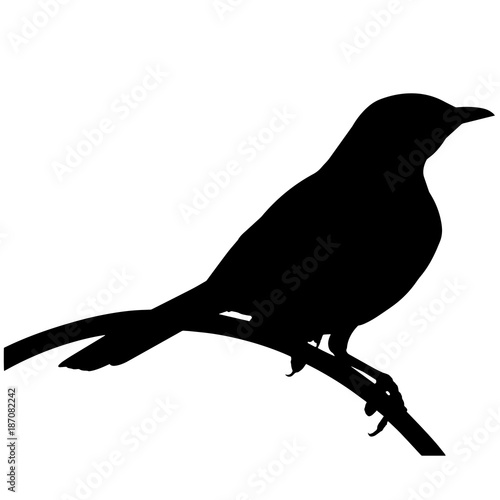 Canvas Print Mocking bird Silhouette Vector Graphics