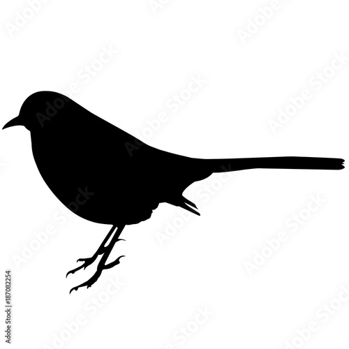 Fotografía Mocking bird Silhouette Vector Graphics