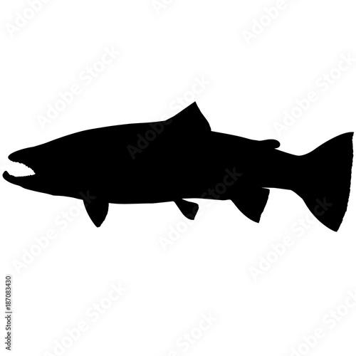 Fotografía Steelhead trout Silhouette Vector Graphics