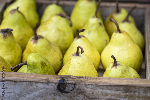 Yellow Williams (Bartlett) pears in wooden box, closeup, background Canvas Print