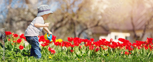 Fotomural  Little child watering tulips on the flower bed in beautiful spring day