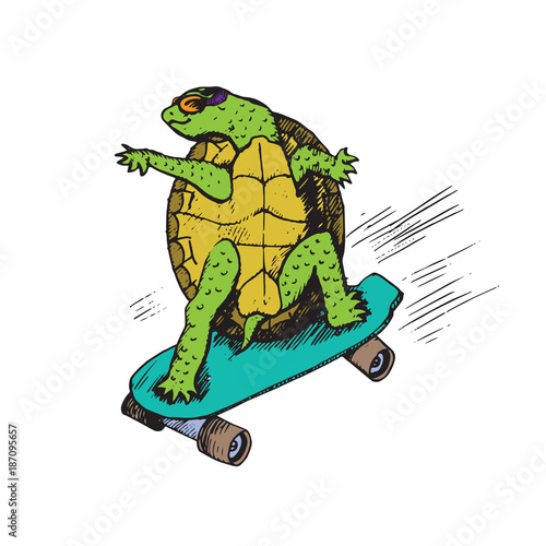 Fotografie, Obraz  Cartoon character of turtle in glasses on green skateboard, hand drawn doodle sk