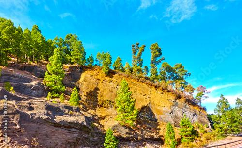 Fotografía Trees on a mountainside