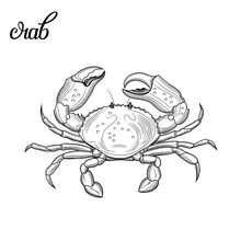 Crab. Seafood. Vector Illustra...