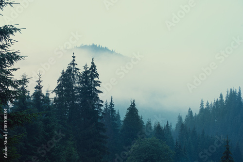 Aluminium Prints Misty landscape with mountains and fir forest in hipster vintage retro style